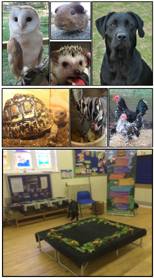 Animals included on an indoor visit